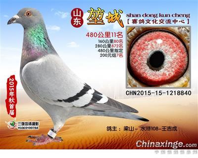 2015年成绩鸽
