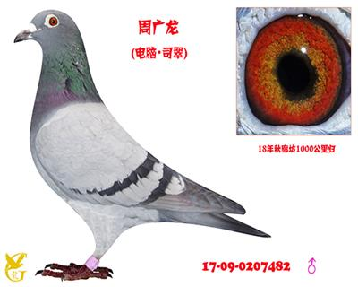 周广龙・0207482
