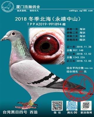 台湾黑目西翁