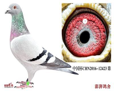 中国杯CHN2016-12423