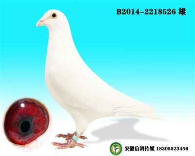 范格米内 B2014-2218526 雄