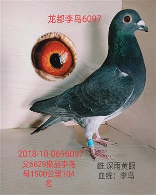 龙都李鸟6097