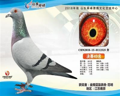"""""""舜峰525"""""""