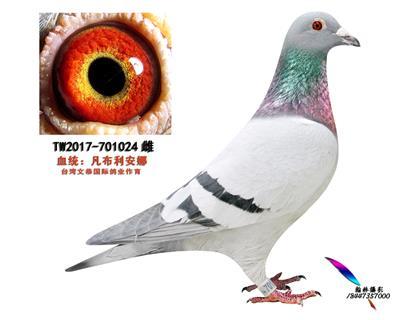 TW2017-701024雌
