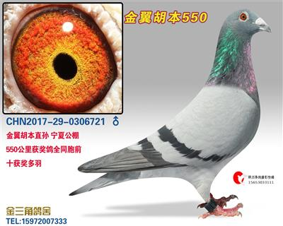 金翼胡本550