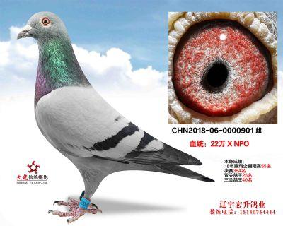 惠翔901
