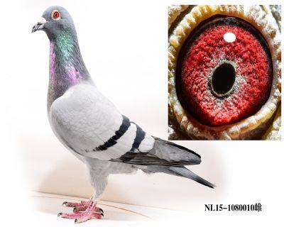 NL15-1080010雌