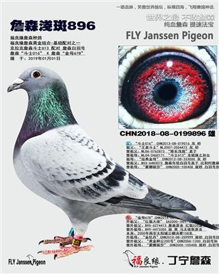 詹森浅斑896
