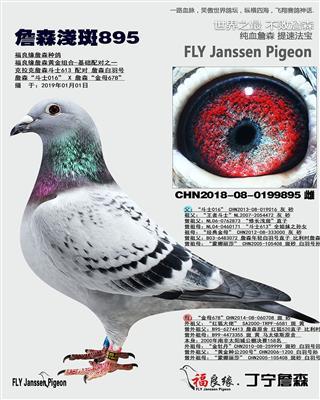 詹森浅斑895