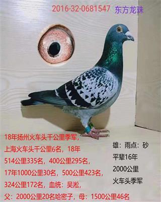 东方龙珠547
