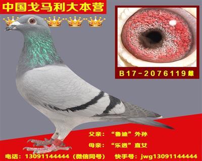 B17-2076119雌