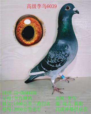 高级李鸟6039
