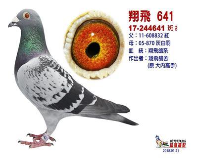 翔�w641