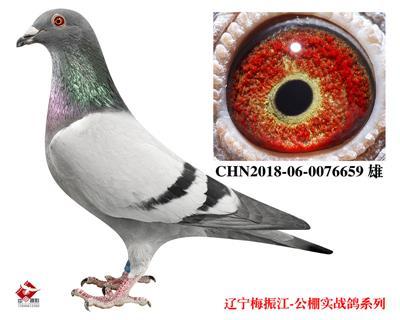 梅振江18年精品幼��