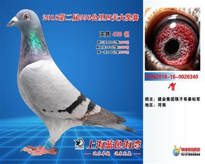 上海蓝色海湾公棚决赛410名