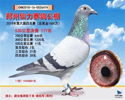 郑州信力公棚决177名