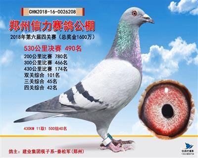 建业集团赛鸽种育机构