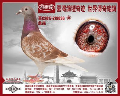 詹森红狐战斗机X红蝴蝶036