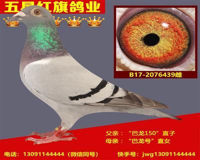 B17-2076439雌
