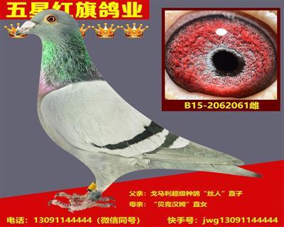 B15-2062061雌