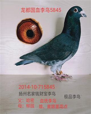 龙都国血李鸟5845