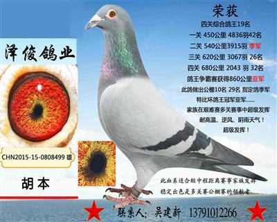 胡本8499