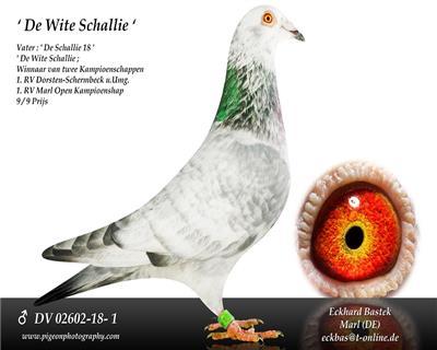 德福国际鸽业