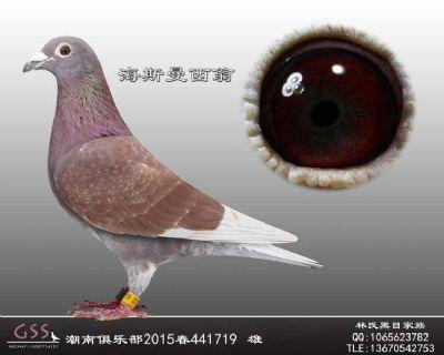 台湾海斯曼西翁