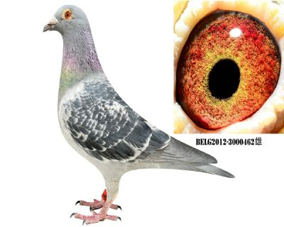 BELG2012-3000462