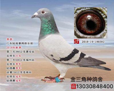 神奇紫罗兰(700公里冠軍)