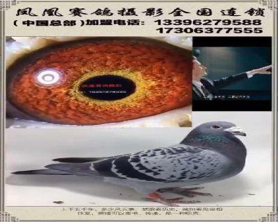 赛鸽摄影技术教学