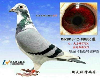 蚌埠市鸽会特比亚军