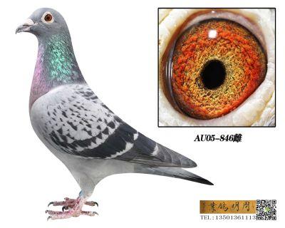 AU05-846