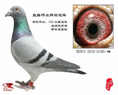 HKRPA-2010-01801