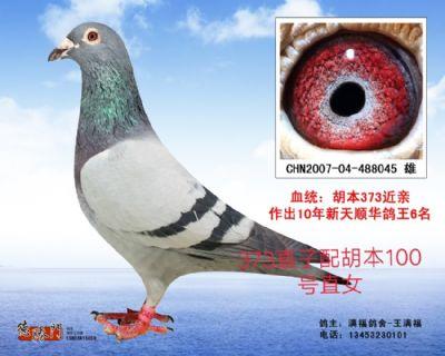 胡本373直子×胡本100号直女