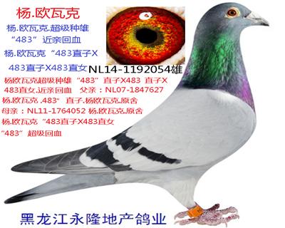 """杨欧瓦克超级种雄""""483""""回血"""