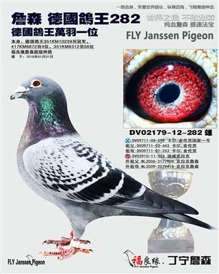 詹森 德国鸽王282