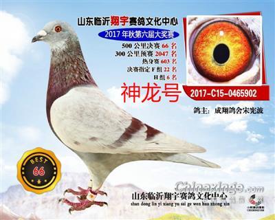 山东翔宇公棚决赛 66 名