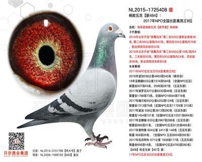 杨欧瓦克【新484】17年长距离鸽王8位
