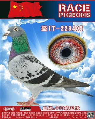 清棚高代近亲回血詹森019-405