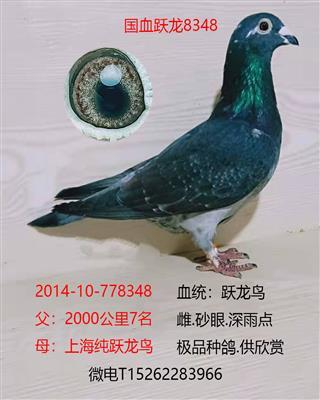 国血跃龙8348