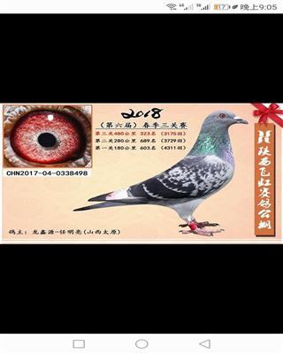 龙鑫-498