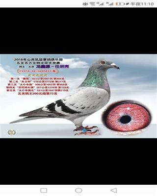 龙鑫833