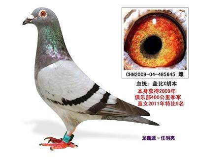 龙鑫645