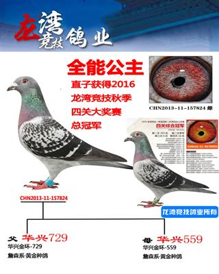 2016龙湾竞技南北四关大奖赛总冠军母亲