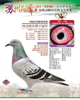2018灵峰冠军号