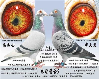 因鸽棚拆迁部分种鸽友情价支援鸽友望有缘鸽