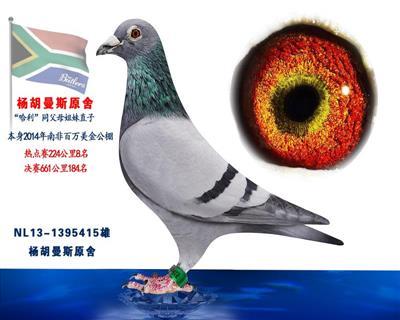 杨胡曼斯南非热点赛8名决赛184名