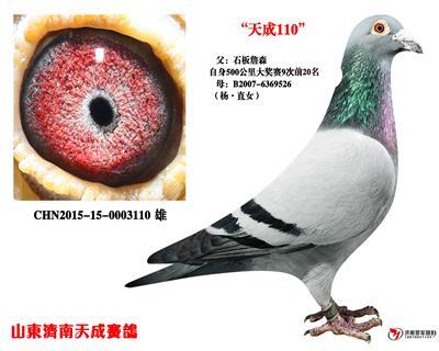奥林匹克003杨・直女X石板詹森