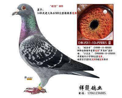 """""""旺仔号""""直子865"""